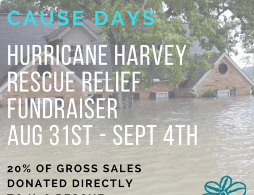 Betty Cause Days: Hurricane Harvey Rescue